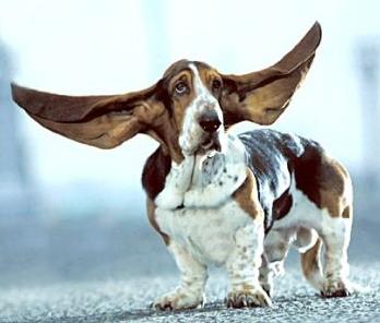 Ambulatorio veterinario orsamaggiore album dei pazienti - Quando fare il primo bagno al cane ...